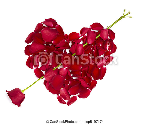 heart shape rose petals flower love valentine day - csp5197174