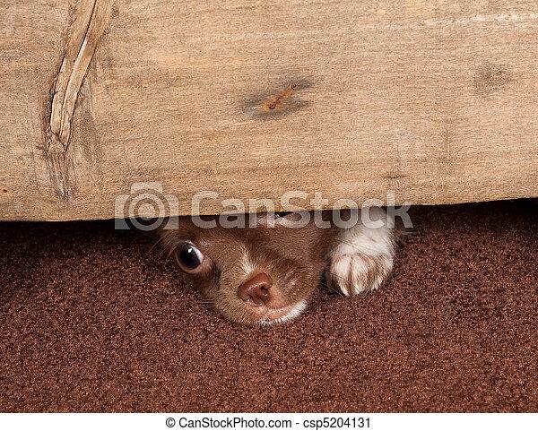 Puppy escape - csp5204131