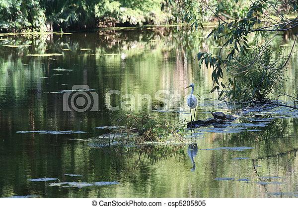 Louisana New Orleans Swamp Scene - csp5205805