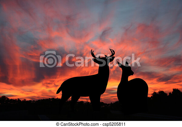 Whitetail Buck & Doe In The Sunset - csp5205811