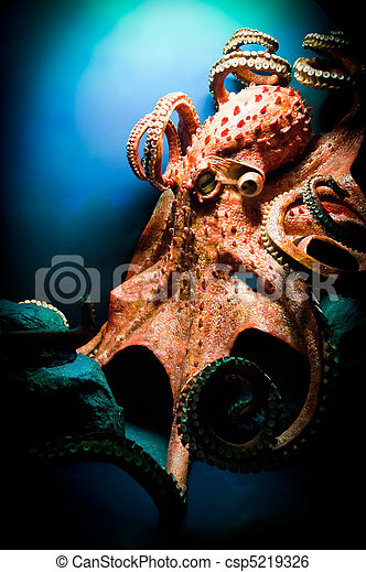 Scary Giant Octopus - csp5219326