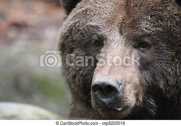 wa, Treck, foto, gräulich, Tierwelt,  Park, Nordwesten, genommen, bär - csp5220016