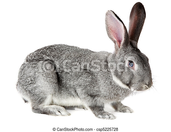 Adorable rabbit - csp5225728