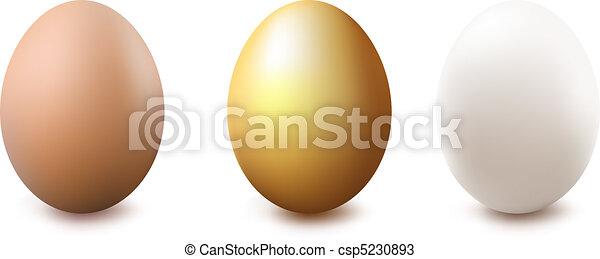 Eggs - csp5230893