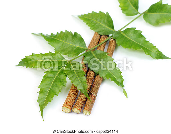 Neem leaves and twigs - csp5234114