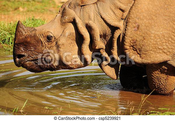 One horned Rhino - csp5239921