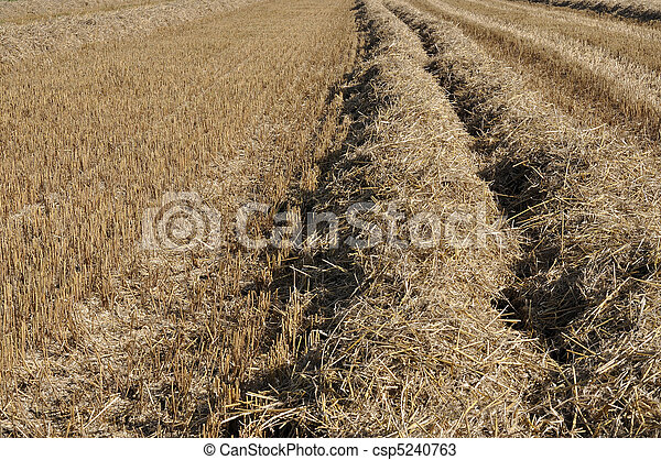 stubble and straw - csp5240763
