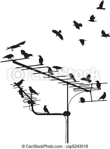 Crows on the antenna - csp5243018