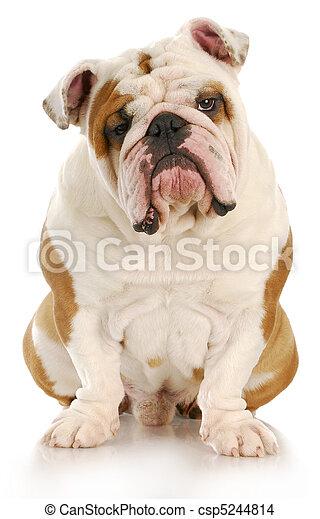ugly dog - csp5244814