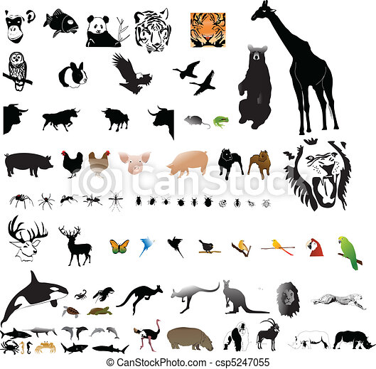collection of animals - csp5247055