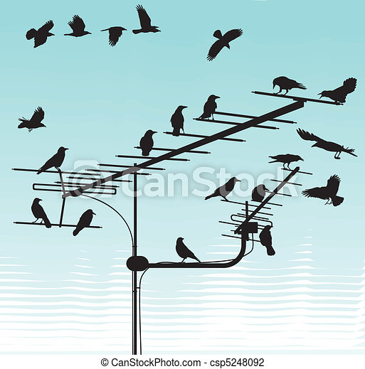 Crows on television aerials - csp5248092