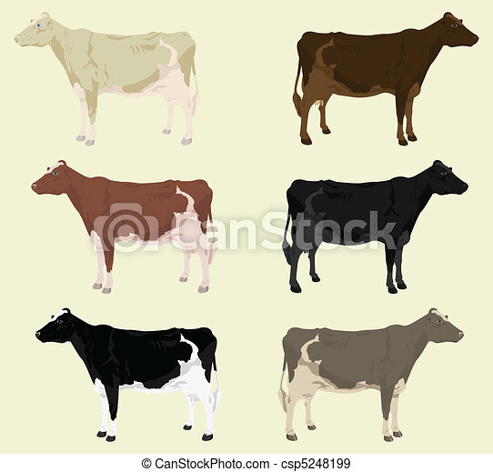Some cows on a farm of different colouring. A vector illustration - csp5248199