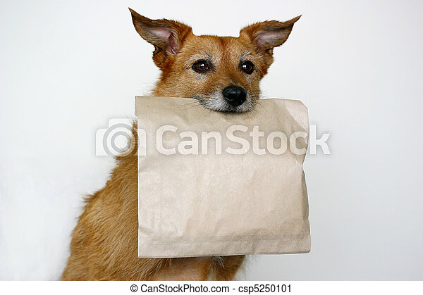 Dog with a plain paper bag - csp5250101