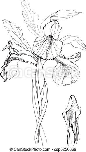 Iris stock illustration royalty free illustrations stock clip