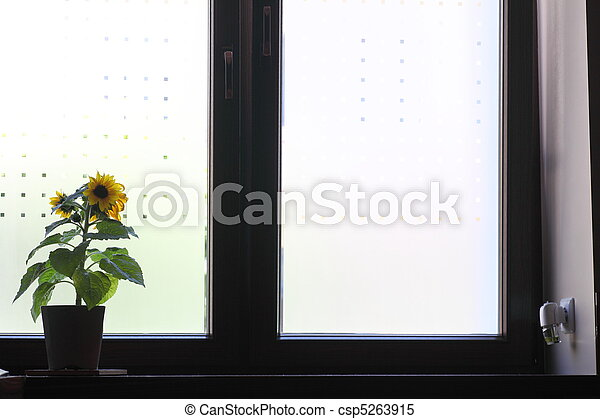 Flowers on a window sill. - csp5263915