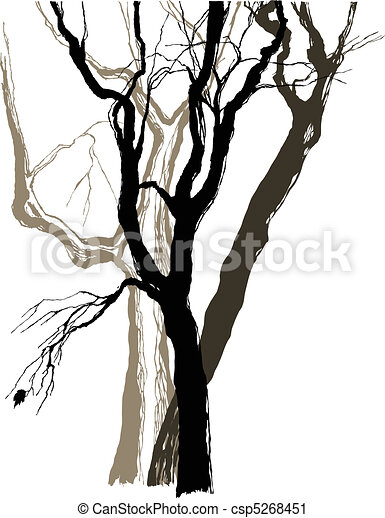 old trees drawing  graphic  sketch - csp5268451