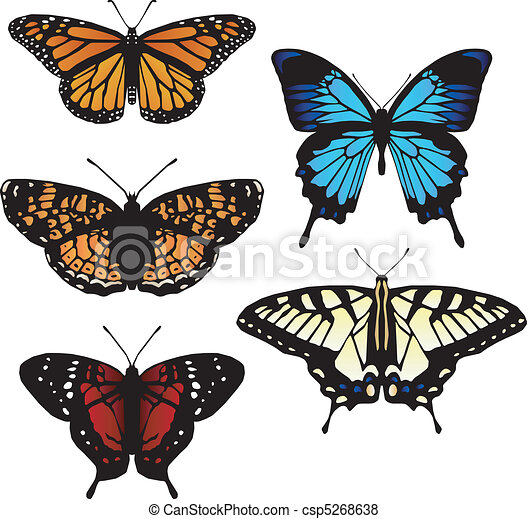 Five vector butterflies  - csp5268638