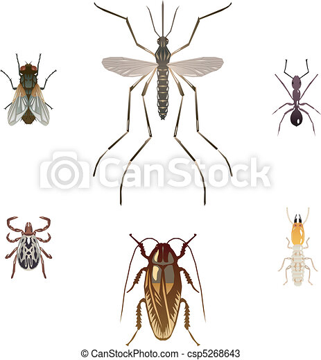 Six illustrations of pest insects - csp5268643
