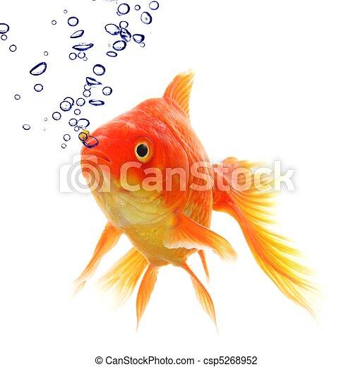 Photo de poisson rouge bulles poisson rouge dans eau for Tarif poisson rouge