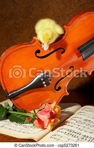 Duck on a violin - csp5273261
