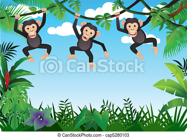 three chimpanzee - csp5280103