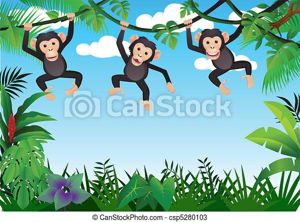 three chimpanzee - csp5280103