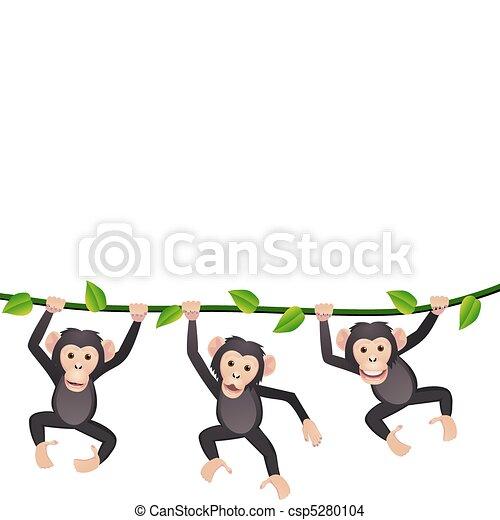 three chimpanzee - csp5280104