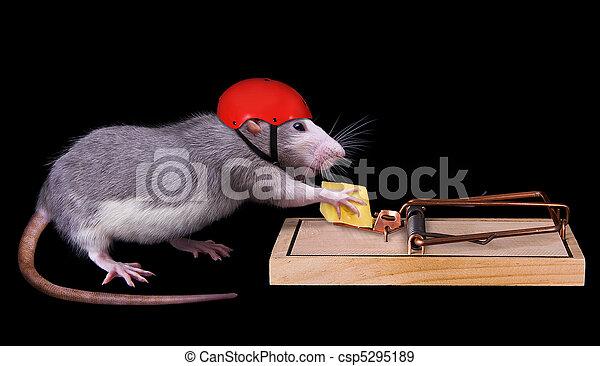 rat cheating death - csp5295189