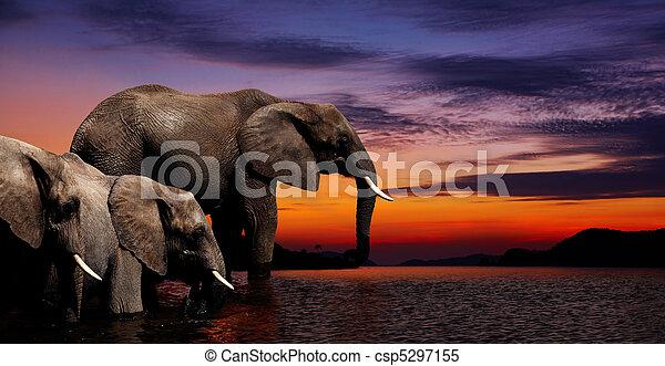 Elephant fantasy - csp5297155