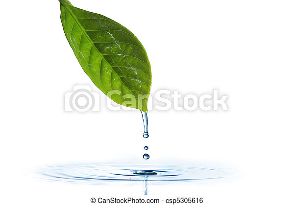 Water dripping of a leaf - csp5305616