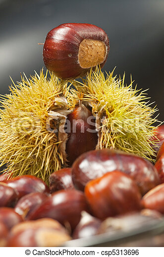 spiky sweet chestnuts at autumn - csp5313696