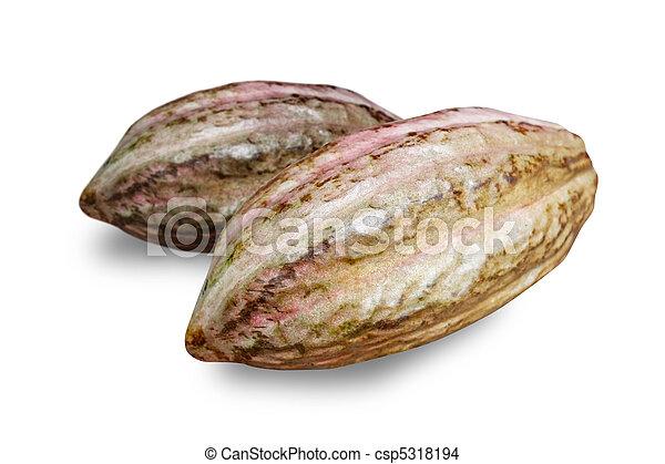 Cocoa fruit - csp5318194