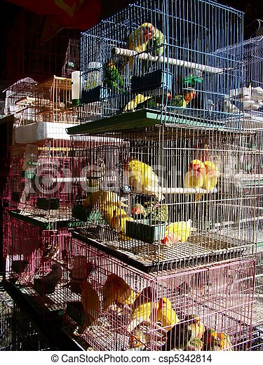 assorted birds in stacked cages