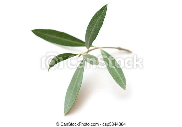 Olive tree twig - csp5344364
