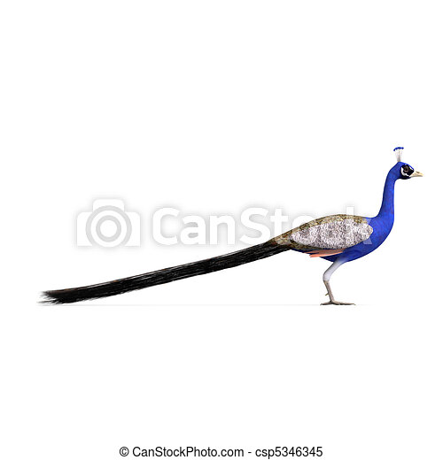 gorgeous male peacock. 3D rendering with  and shadow over white - csp5346345