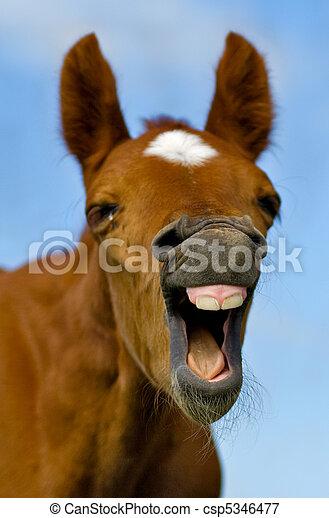 öppna häst