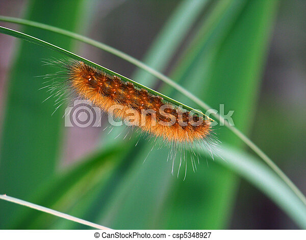Fuzzy Caterpillar - csp5348927