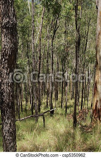 Pristine Forest - csp5350962