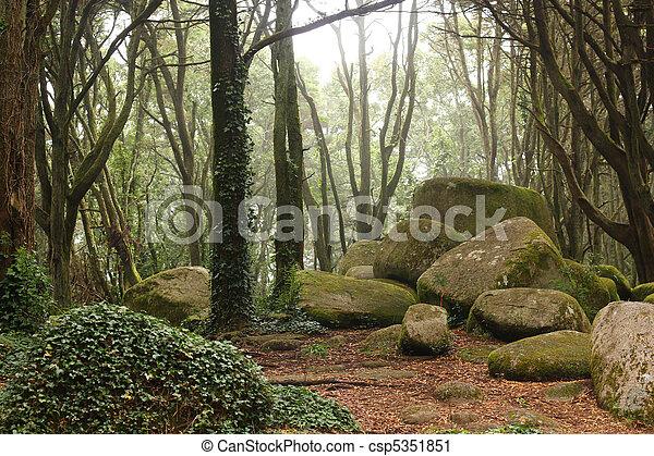 énorme, vert, forêt, Arbres, rochers - csp5351851