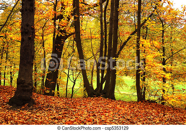Banque de photographies de automne for t clamart meudon for Photographie clamart