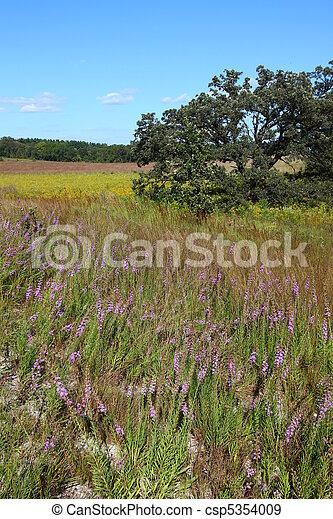 Nachusa Grasslands - Illinois - csp5354009