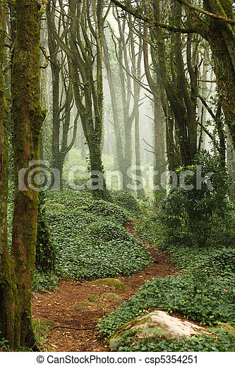 Path in green forest trees with huge rocks - csp5354251