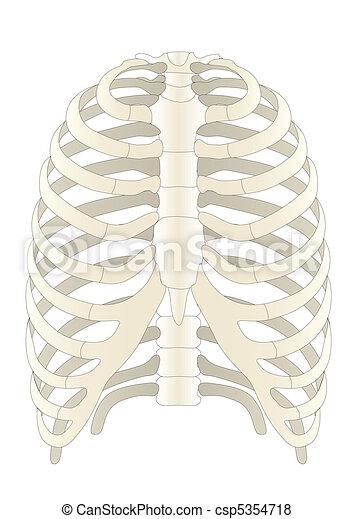 Vector human Skelton bones  - csp5354718
