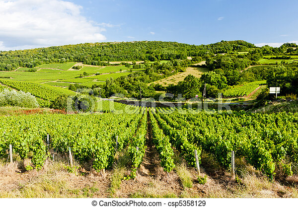 vineyard near Pouilly-Fuisse, Burgundy, France - csp5358129