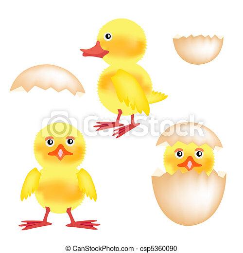 Newborn nestling of the hen - csp5360090
