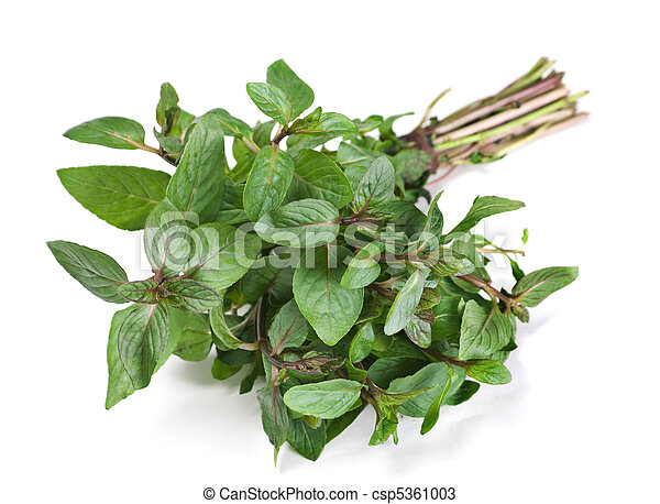 Spearmint herb - csp5361003