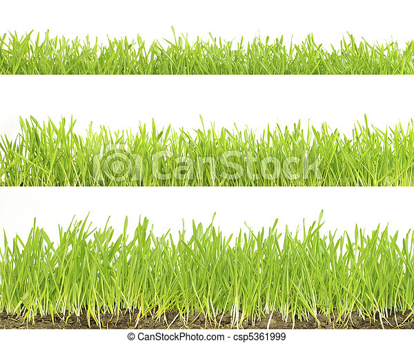 lawn isolated on white  - csp5361999