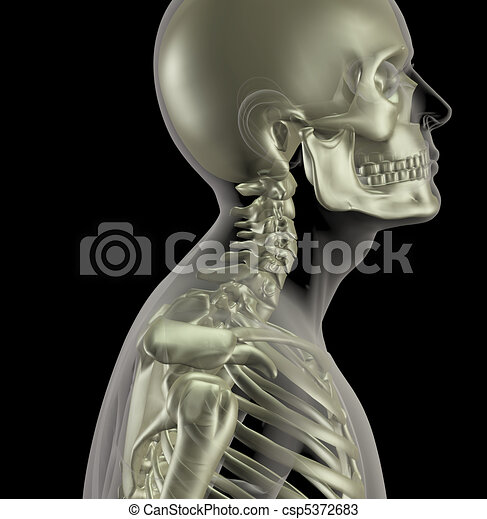 Male skeleton with close up of neck bones - csp5372683