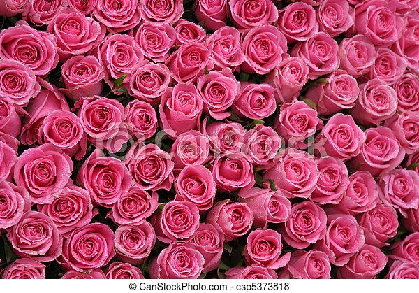 Fotos De Cor De Rosa Rosas Fundo Bonito Quentes Cor