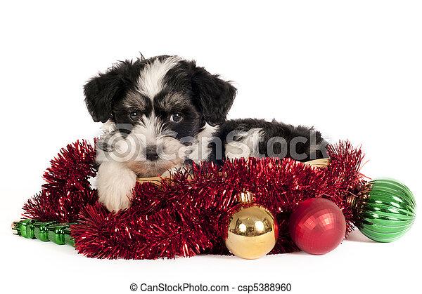 Powder-puff puppy - csp5388960